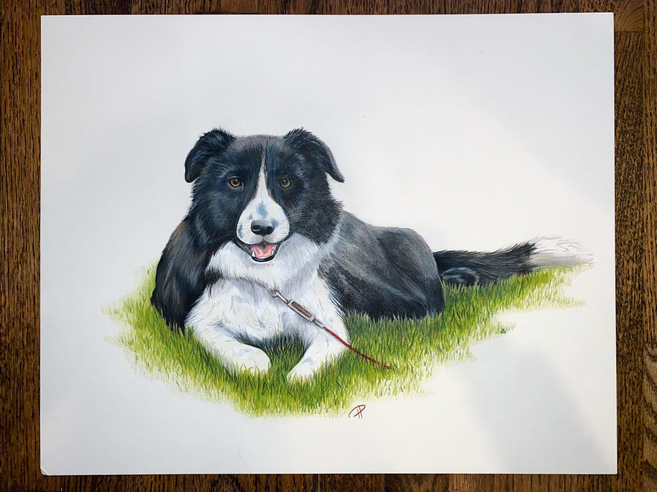 This is a Prismacolor colored pencil drawing on white mixed media board of a friend's dog, Nike!